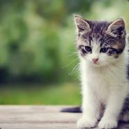 KittenTamer101
