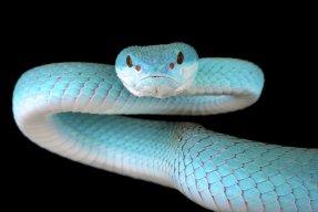 SnakePlayz