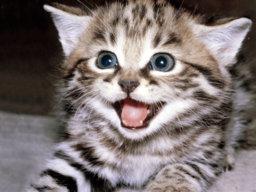 Mr. KittyCat