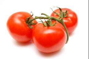 tomatenbauer