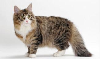 BEAMED-CAT