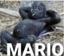Maurizio2529205