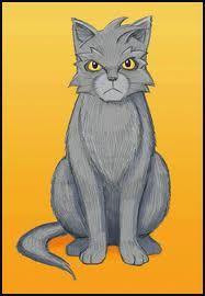 Republican Cat