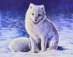 ArcticFox522